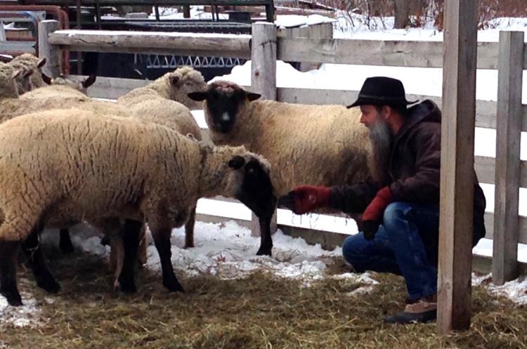 Shepherd Tim